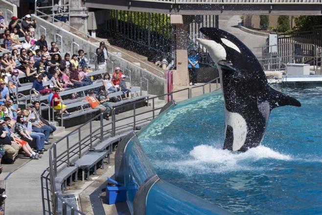 Lawmakers, Activists Underwhelmed by SeaWorld Plan to End Orca Show